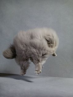 10 best animals without necks images on pinterest funny animals