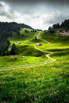 silvaris:    Swiss Alp Grassland byYuriFineart