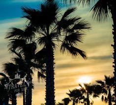 Florida are you ready? Florida, Celestial, Sunset, Usa, Outdoor, Adventure, Sunsets, Outdoors, The Florida