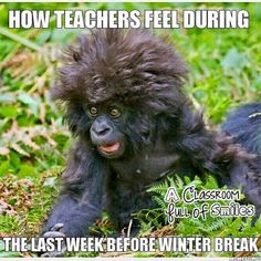 Or the whole month of December if they have too much inside recess!!