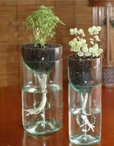 Grope for Luna: creative ways to reuse plastic bottles