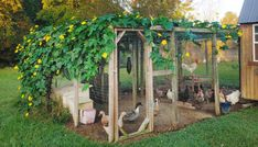 Chicken Run Ideas: Simple Shade and Wind Block - Chicken Recipes Chicken Coop Garden, Cute Chicken Coops, My Pet Chicken, Chicken Coop Run, Diy Chicken Coop Plans, Building A Chicken Coop, Chicken Runs, Simple Chicken Coop, Chicken Run Ideas Diy
