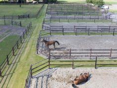 Dream stables, Dutch style | Röwer & Rüb