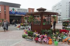 Aspandem abre un quiosco de flores en la plaza del Mercado Municipal de Marbella con el apoyo del Ayuntamiento