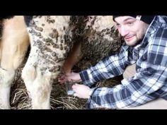 MÓJ PIERWSZY RAZ: Dojenie krowy :D Czapka Bestia tylko w piekuo.com   | [BrzozaTV] - YouTube  #piekuo #brzozatv #pierwszyraz #dojeniekrowy #czapka #czapkabestia #bestia
