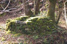 Corripa para guardar las castañas, construcción tradicional que puedes ver en los bosques de castaños de #Asturias