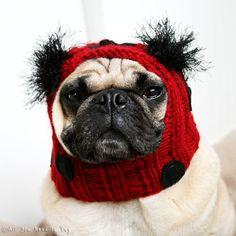 4edf7d092b2 Items similar to Dog Hat - Lovely Little Ladybug Hat on Etsy