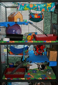 I Love how they placed the big exercise ball in the cage with bedding inside.