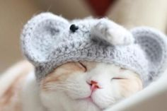 Awwww! You know I had to pin this kitten it's got an elephant hat on!!!!!