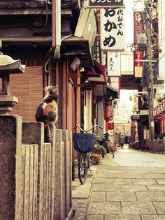 kitty on a back street in Japan -- Matsuura Go To Japan, Visit Japan, Gato Animal, All About Japan, Culture Art, Japan Street, Photo Chat, Famous Castles, Japanese Streets
