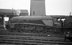 6006 'Sir Ralph Wedgwood' is oiled by the driver on Peterborough shed on This loco was later transferred to Aberdeen. Steam Trains Uk, Herring Gull, Steam Railway, Peterborough, Steam Engine, Steam Locomotive, Historical Pictures, Amazing Pictures, Diesel
