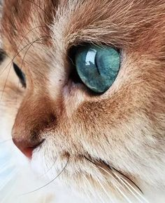 Photo - Google+ Beautiful cat