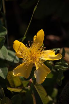 Assisi - settembre 2014 Places In Europe, Yellow Flowers, Plants, Plant, Planets