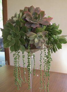 Des succulentes dans un verre @Pinterest