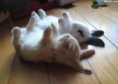 sleepy bunnies!