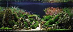 2014 AGA Aquascaping Contest - Entry #615