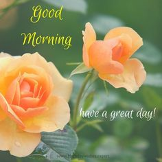 Morning Images have such a power to brighten our day when we stumble upon them! This collection features good morning quotes, all on pics of beautiful flowers. Flower Images, Flower Pictures, Plantar Rosales, Growing Roses, Blooming Rose, Orange Roses, Good Afternoon, Blossom Flower, Bloom Blossom