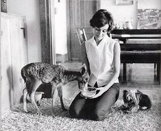 Audrey Hepburn and her little pet fawn Pippin and Yorkshire Terrier Mrs. Famous