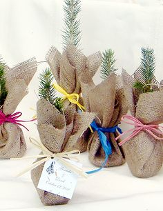Saplings designed to be given as favors... these would make really cool gifts for those participating in the Eagle Court of Honor.