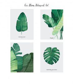 Zestaw plakatów, Plakat Monstera, Plakat Bananowiec, Plakaty botaniczne, plakat botaniczny, plakat akwarela, plakat liść, plakat minimalistyczny, plakat na ścianę, plakat A4