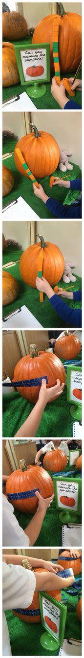 Pumpkin measuring using non-standard and standard measuring units