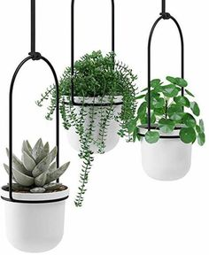 Bathroom, Plants, Ceiling, Washroom, Bath Room, Flora, Bath, Bathrooms, Plant
