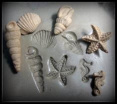 Shell Stamps