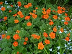 """Geum 