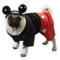 mickey mouse dog hahahahahahaha