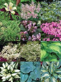 Product Viewer - Shade Garden