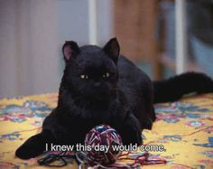 "But if your date worked out, pretend it's no big deal. | The Ultimate Dating Guide, As Told By Salem From ""Sabrina The Teenage Witch"""