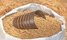 So, you own a horse or have a friend who owns one, and ever wonder if sweet feed moonshine is a thing? Well, even if you don't, here's a quick answer for you – yes, you can use horse feed for making moonshine! Since anything containing sugars or starches can be fermented into liquor, why must horse feed be an exception? Moreover, making a horse feed mash is fairly simple to make and ferment, compared to certain #sugar #sweetfeed #yeast