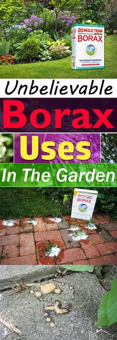 Borax is used for various house chores but did you know this naturally occurring mineral can be used in the garden too? Check out! #controlpestsingarden