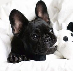 Frenchies are the cutest, cuddliest little things, but sO chic at the same time. I wear clothes that are comfortable and soft, but still have inspirational lines and class.