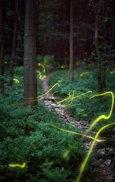 Lightning bugs in a forest using slow shutter speed.