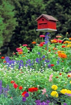 Zinnias and birdhouse