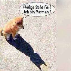 Habt einen heldenhaften Sonntag!   www.tierischer-urlaub.com #urlaubmithund #ferienmithund #hunde #batman #sonntag