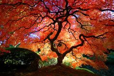 Photos of japanese garden design ideas with trees shrubs bushes and plants. Top Japanese tree varieties for a home garden and landscaped yard. Japanese Tree, Japanese Maple, Japanese Gardens, Japanese Nature, Japanese Sleeve, Beautiful World, Beautiful Images, Beautiful Things, Simply Beautiful