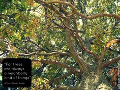 For trees are always a neighborly kind of things - Arthur Conan Doyle (From Sherlock Holmes)