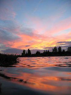 Touffe au bord du lac