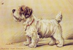 Sealyham Terrier,  Lucy Dawson