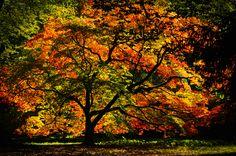 Autumn by John Portlock on 500px