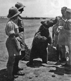 Corporal Wojtek Perski was a Syrian Brown Bear and a hero of World War II. In 1942, Wojtek was purchased by the 22 Transport Company, Artillery Division, II Corp of the Polish Army in Iran. As a small cub, the soldiers fed Wojtek condensed milk from a bottle. As Wojtek grew up, he developed a …