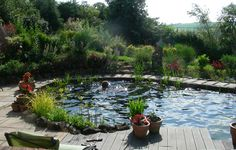 natural swimming pond images
