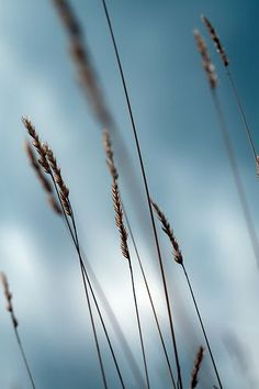 The Wind that Shakes the Barley | photography . Fotografie . photographie | Photo: una cierta mirada |: