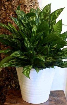 Комнатные цветы для лентяев и трудоголиков Container Gardening, Indoor Plants, House Plants, Landscape Design, Home And Garden, Outdoor, Cooking, Plants, Flowers