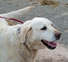 In a recent survey, the Grey Muzzle Organization found that adoptions of senior dogs are up nationwide.