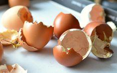 Cascas de ovos são precisosas demais para jogar no lixo! Antes de desperdiçá-las, conheça algumas maneiras de aproveitá-las com sucesso de diferentes formas. Antes de mais nada lave bem as cascas. Não deve haver nenhum traço de clara, gema ou albumina. Então esqueça as antiecológicas palhas de aço. Cascas de ovos trituradas no liquidificador são perfeitas para deixar suas panelas brilhando. Basta misturar o pó com um pouco de água quente. Compost, Reading Eggs, Bananas, Hatching Chickens, Pulling Weeds, Clean Pots, Ancient Recipes, Carnivore, Substitute For Egg