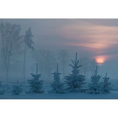 Winter landscape at sunset #Landscapes #Nature #Kozzi - Dollar Stock Images - http://kozzi.tv/WwiGQ