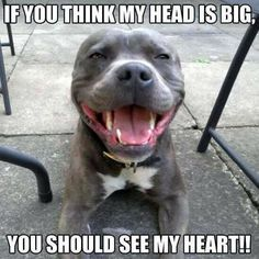 So true! #Staffy smile